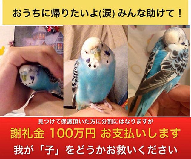 2014/6/9 広告になったインコ