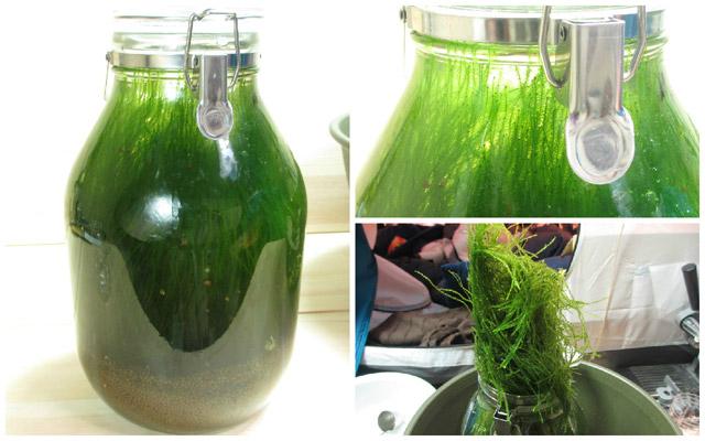 ボトルアクアリウム 水草除去