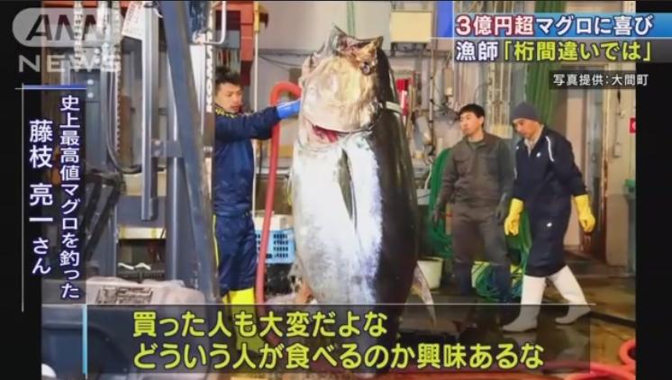 マグロ3億円
