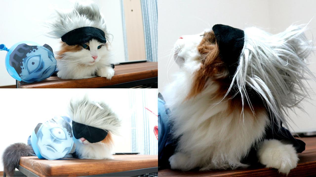 五条悟 コスプレ 猫